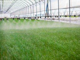 purificazione coltivazioni