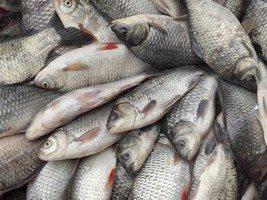 sanificazione ittica